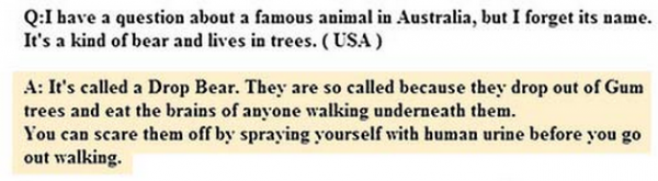 Koala-Bear-Stupid-Question-Australia-Answers-Drop-Bear-Tourism-Board