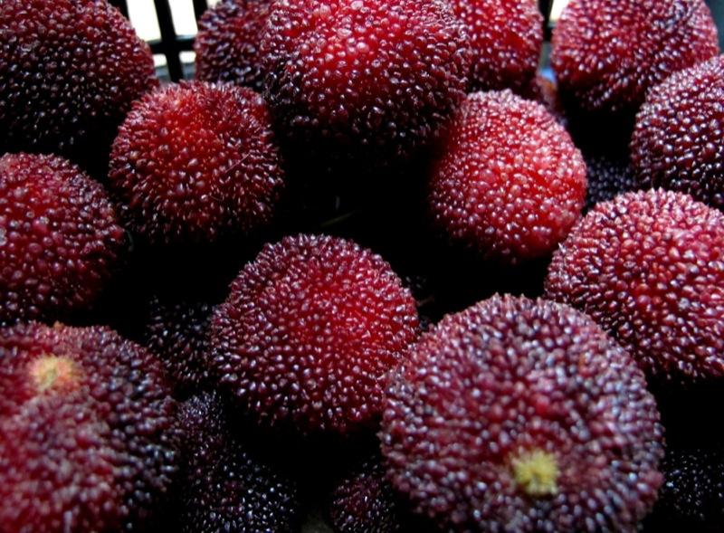 Photograph-Travel-Hong-Kong-Asia-Food-Fruit-Berries