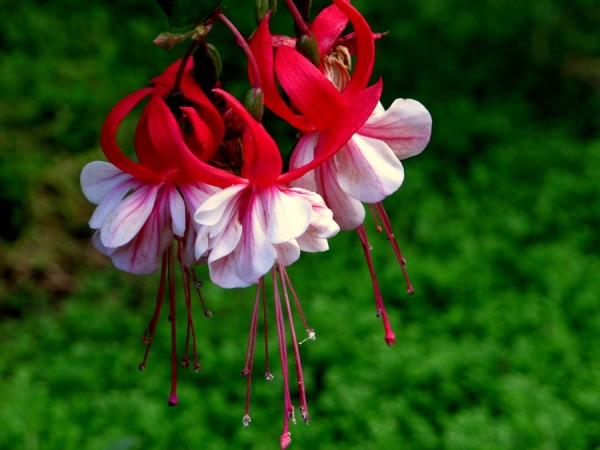 Queens-Earrings-Flowers