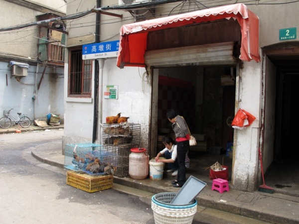 Shanghai-China-Photograph-Alleyway-Market-Poultry-Cages-Food