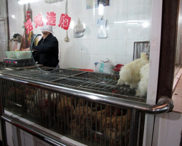 Shanghai-China-Photograph-Wet-Market-Poultry-Live-Food
