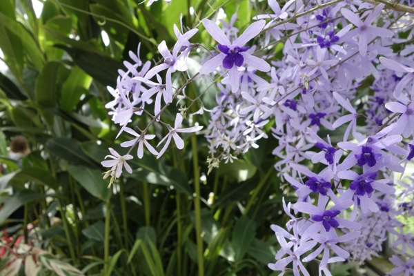 Sony-RX100-Camera-Photograph-Purple-Flowers-Tree