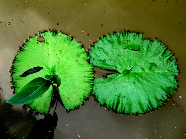 Travel-Photograph-Nature-Zen-Water-Life-Lily-Pads