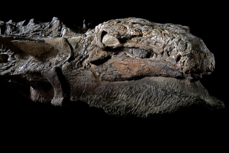 http://www.nationalgeographic.com/photography/proof/2017/05/nodosaur-fossil-discovery-science-photography/?utm_source=NatGeocom&utm_medium=Email&utm_content=Look_Newsletter_20170521&utm_campaign=Look_Newsletter&utm_rd=14082228995