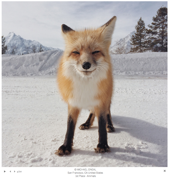 iphone-photography-awards-2014-fox