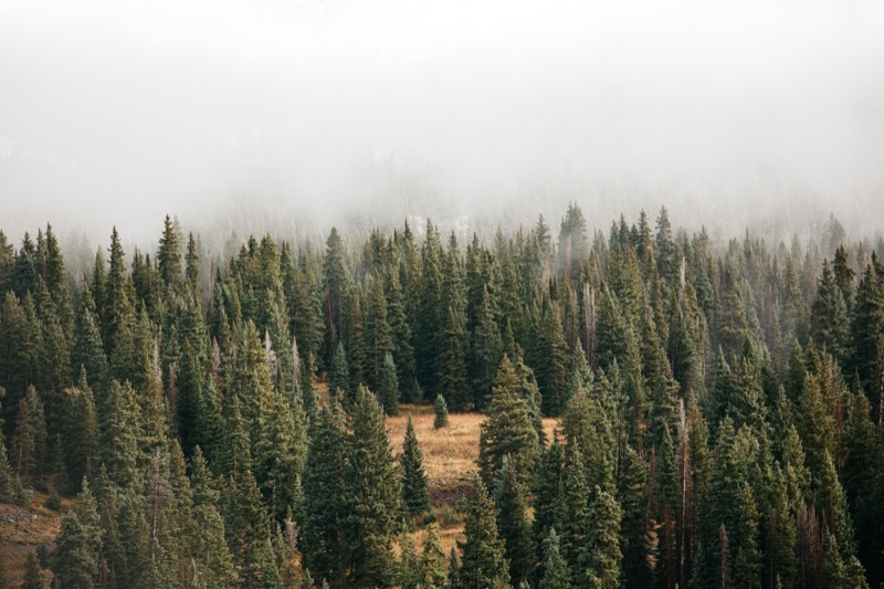 nature-environment-green-wild-travel