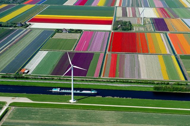 netherlands-tulip-fields