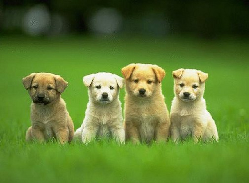 puppies-dogs-cute-cuddly